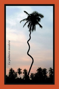 La palmera escalera que sube al cielo