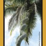 La palmera serpentina